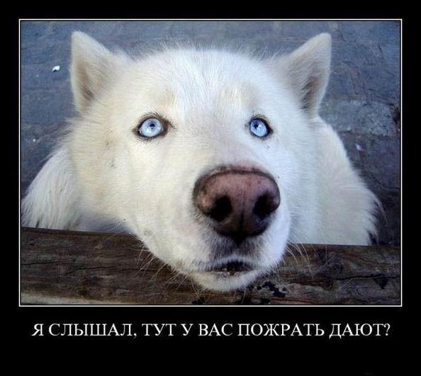 http://www.superdemotivator.ru/dem/demotivatory_144/16.jpg