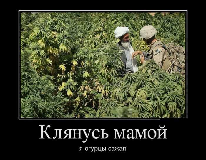 У торговца наркотиками в Киеве изъято каннабиса на 400 тысяч, - Нацполиция - Цензор.НЕТ 5067