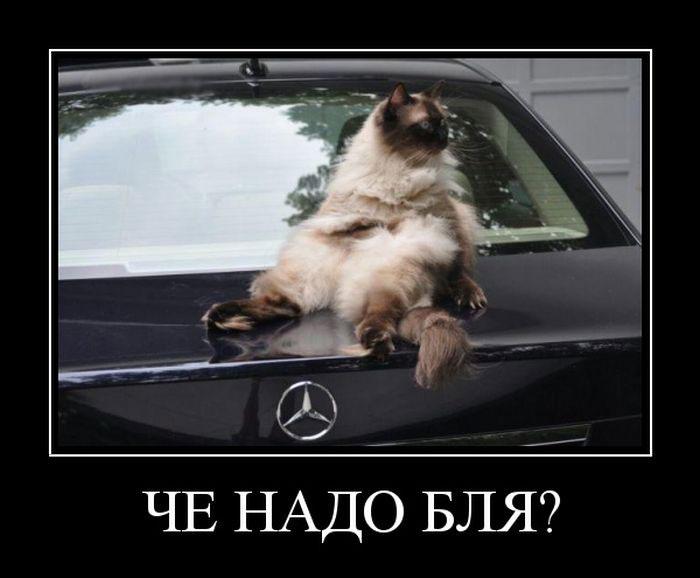 Скачать Wibr на андроид на русском бесплатно
