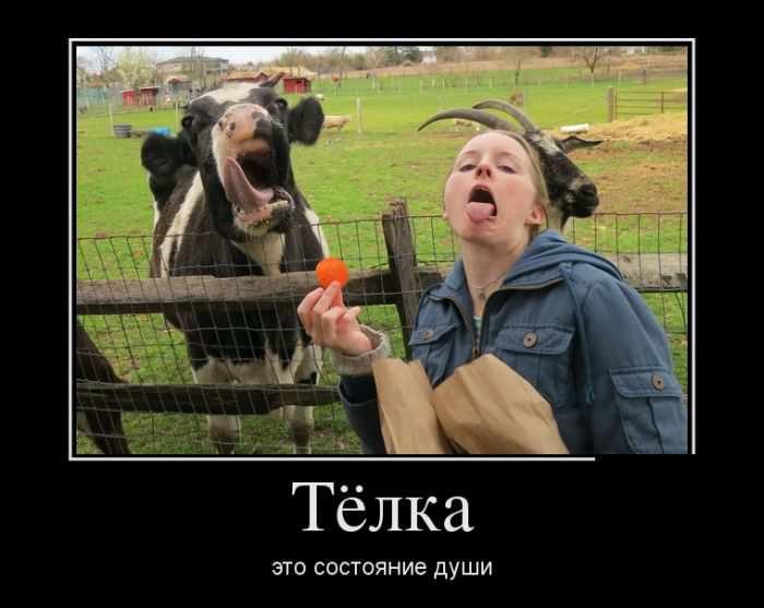 foto-telok-dush